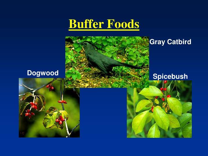 Buffer Foods