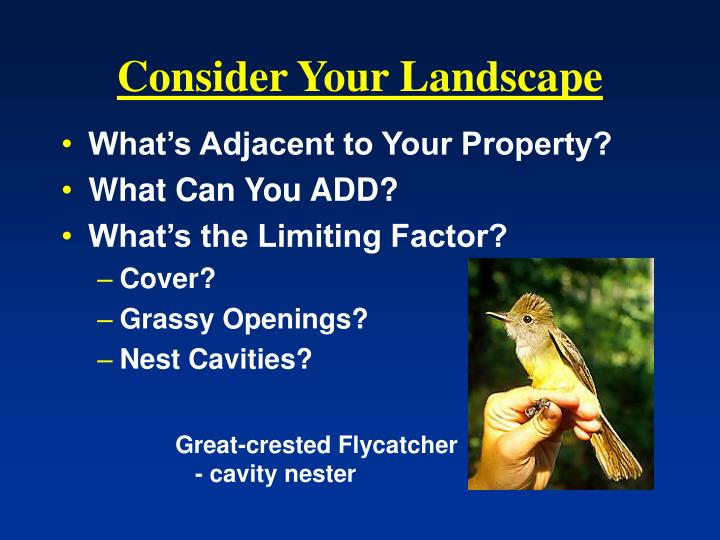 Consider Your Landscape