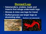 downed logs