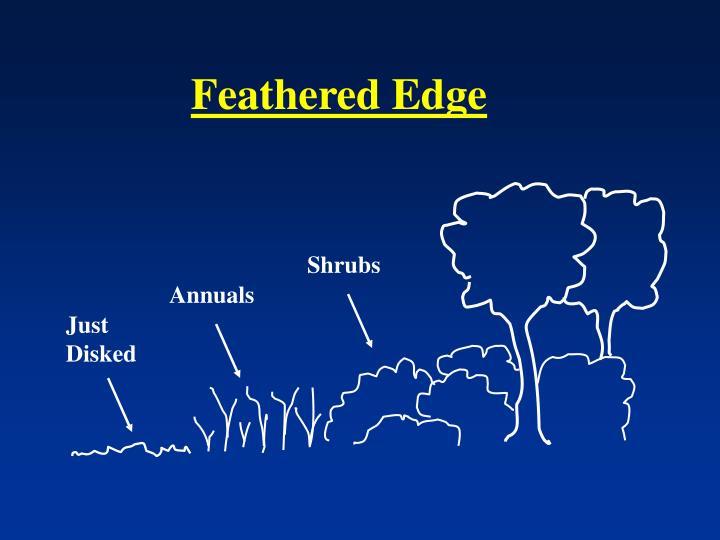 Feathered Edge