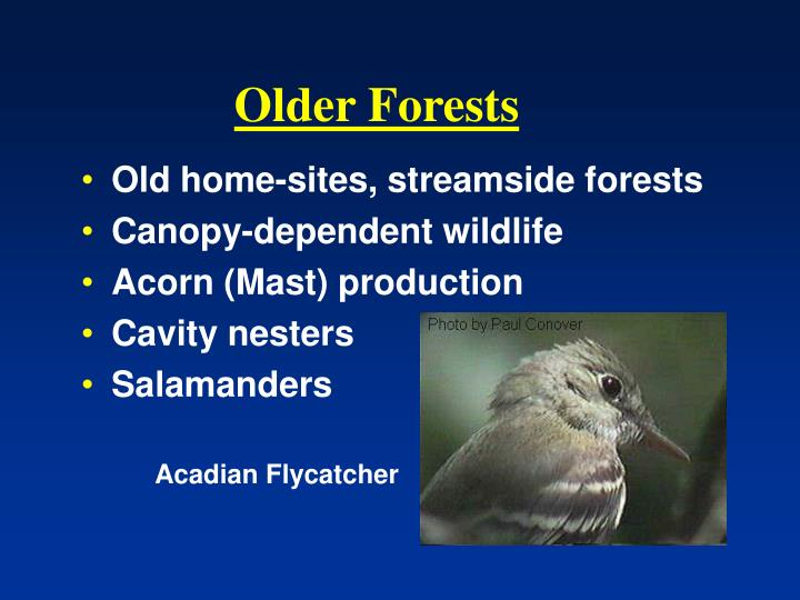 Older Forests