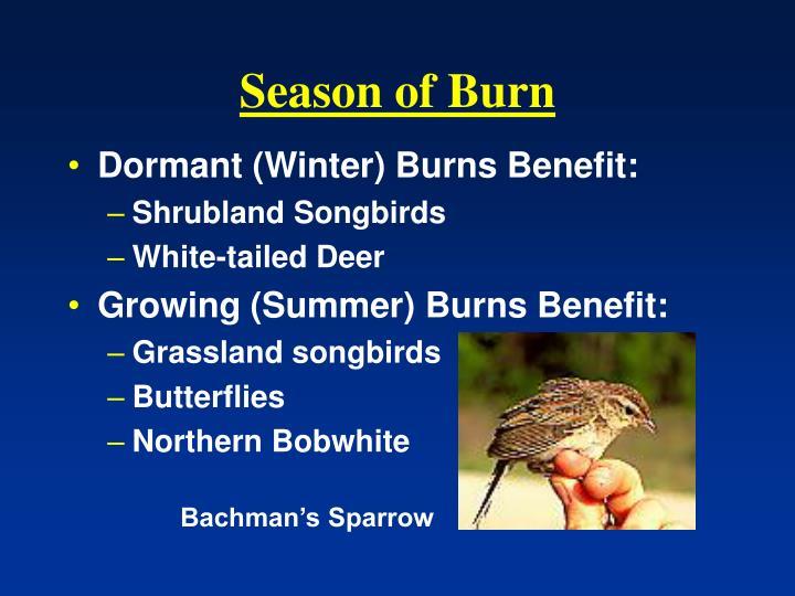 Season of Burn