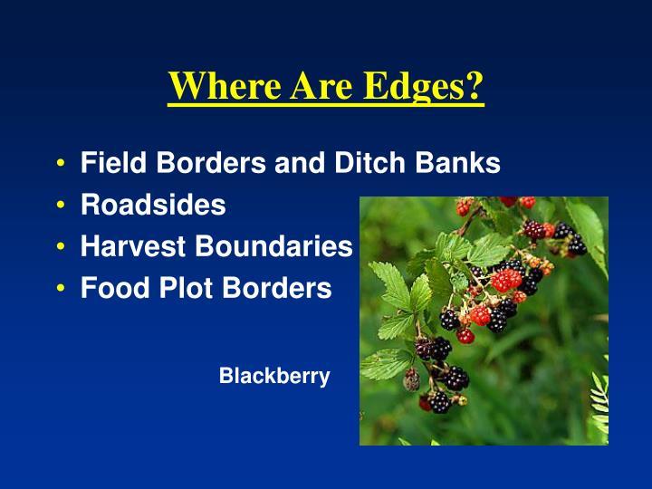 Where Are Edges?