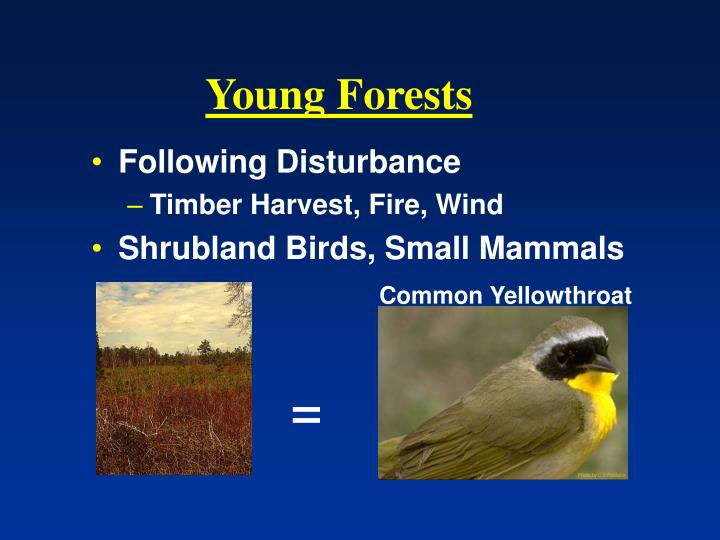 Young Forests