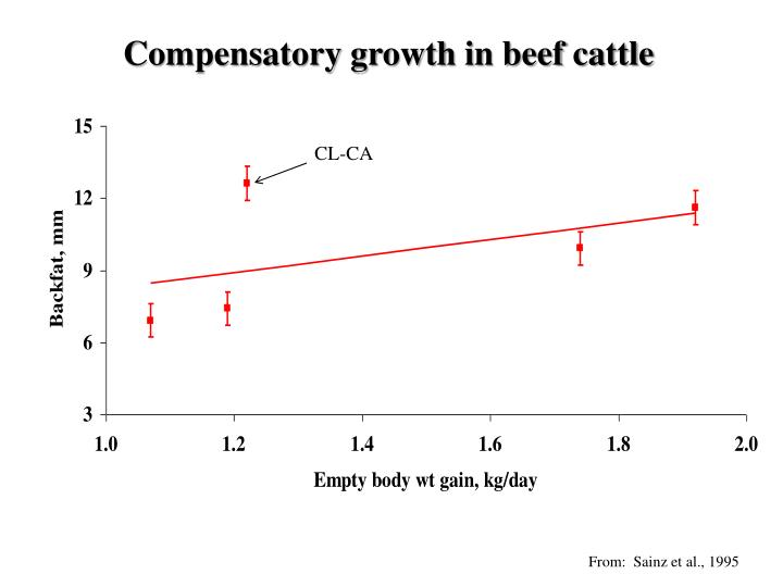 Compensatory growth in beef cattle