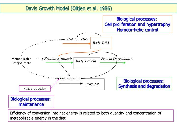 Davis Growth Model (Oltjen et al. 1986)