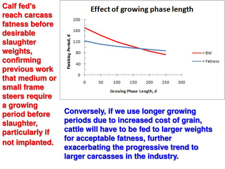 Calf fed's reach carcass fatness before desirable slaughter weights, confirming previous work that medium or small frame steers require a growing period before slaughter, particularly if not implanted.