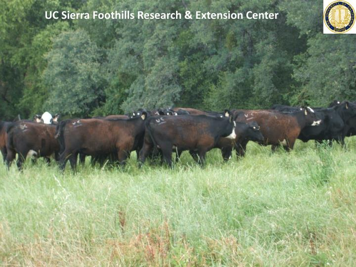UC Sierra Foothills Research & Extension Center