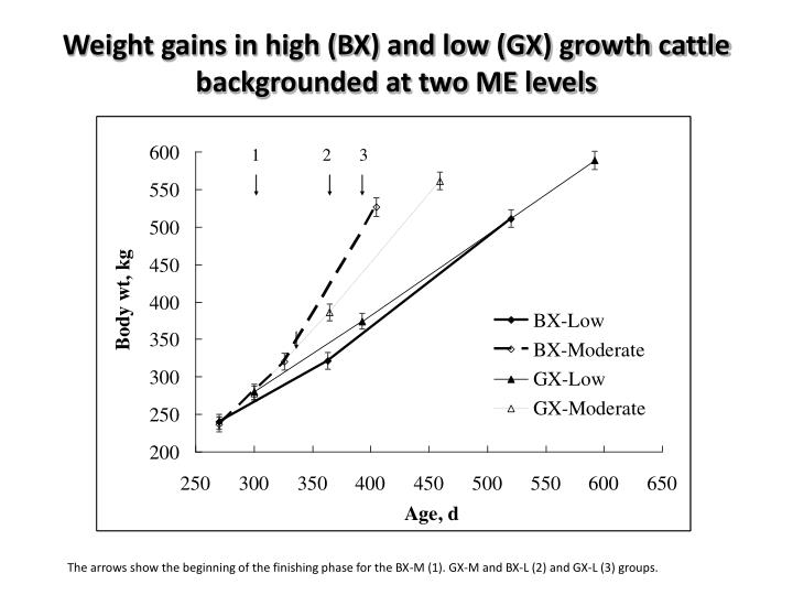 Weight gains in high (BX) and low (GX) growth cattle backgrounded at two ME levels