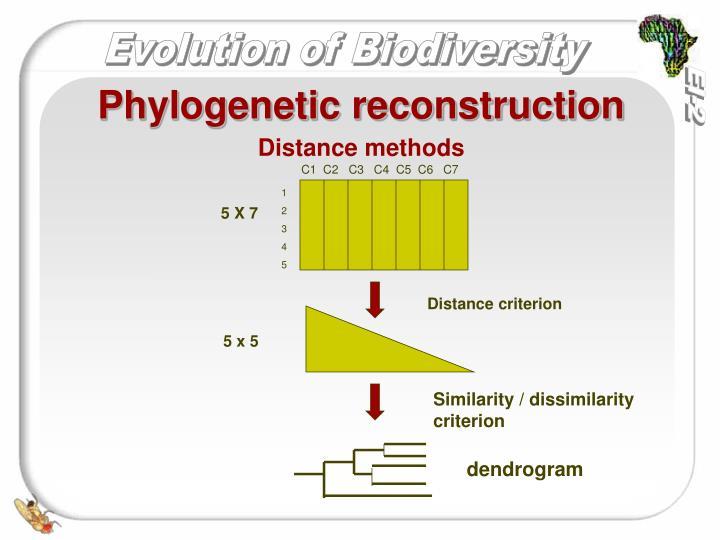 Phylogenetic reconstruction