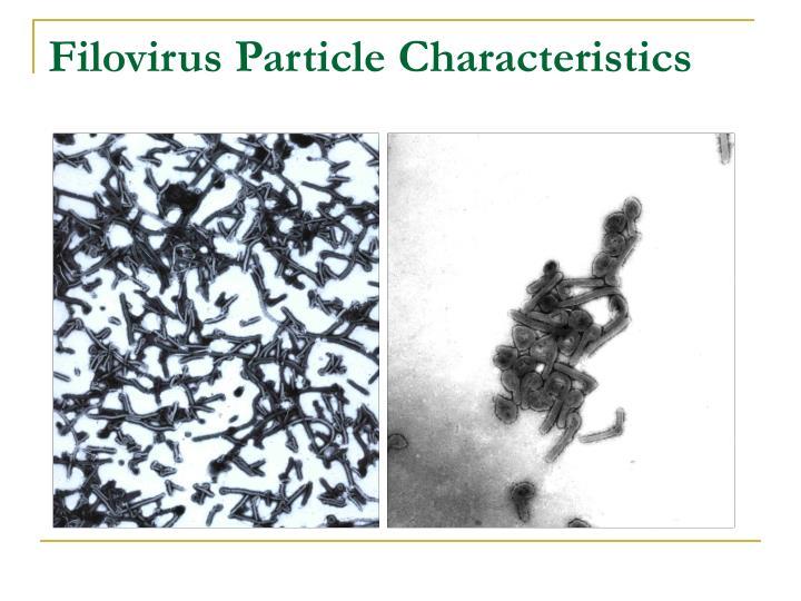 Filovirus Particle Characteristics