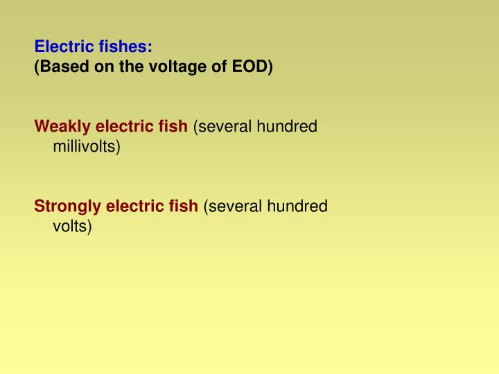 Electric fishes: