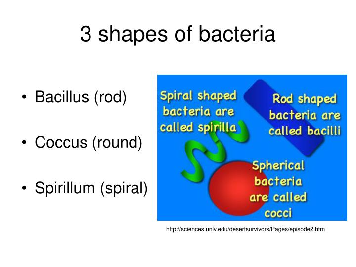 3 shapes of bacteria