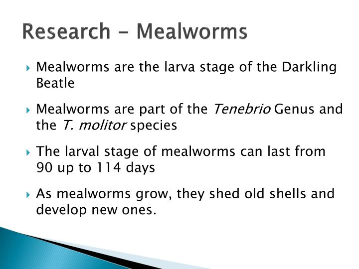 Research - Mealworms