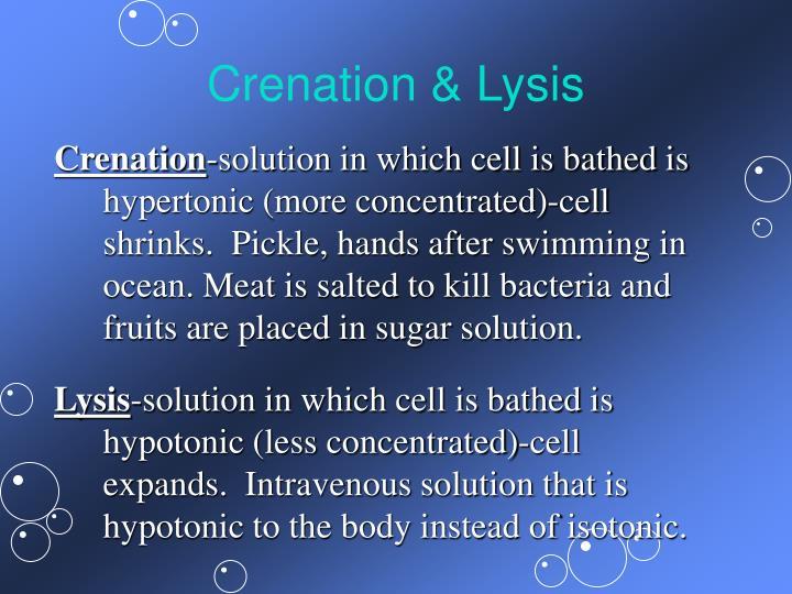 Crenation & Lysis