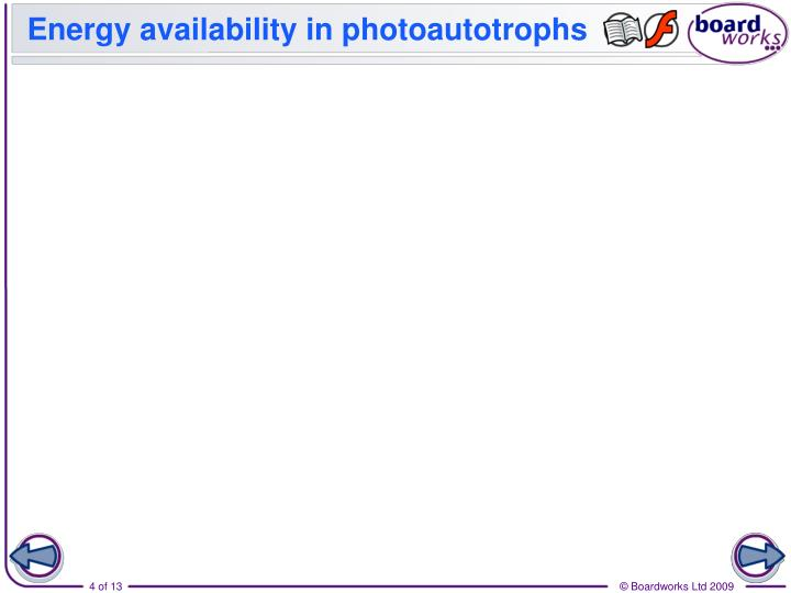 Energy availability in photoautotrophs