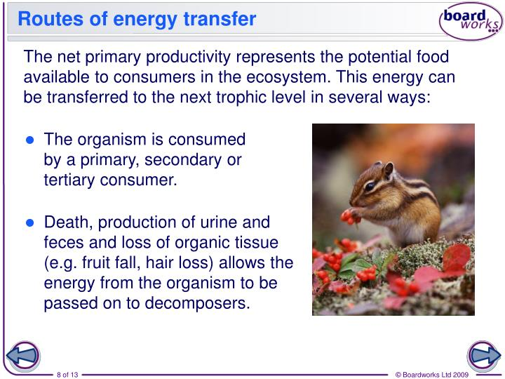 Routes of energy transfer