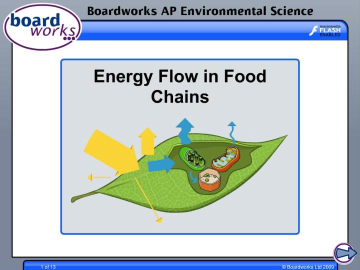 Energy flow through ecosystems