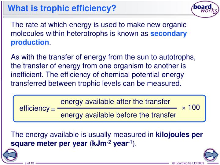 What is trophic efficiency?