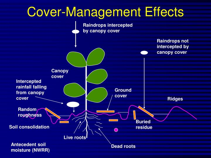 Cover-Management Effects