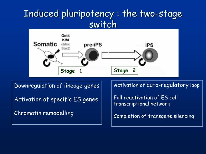 Induced pluripotency : the two-stage switch