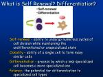 what is self renewal differentiation