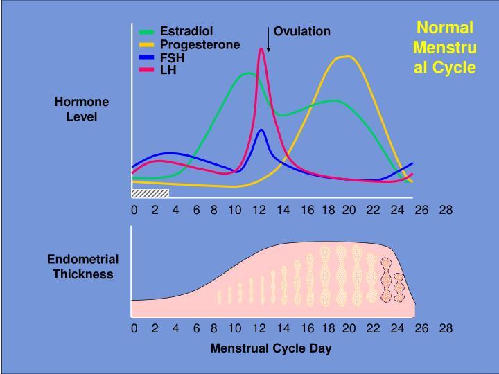 Progesterone delay menstruation