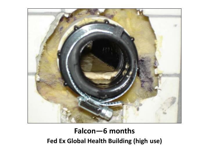 Falcon—6 months