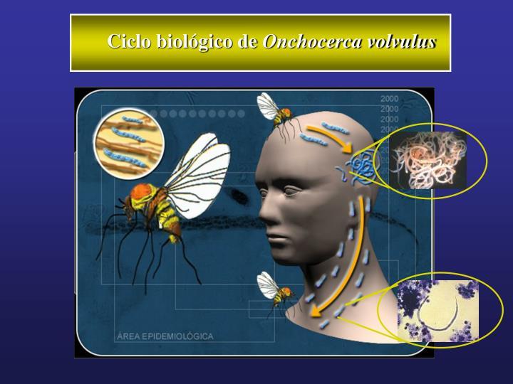 Ciclo biológico de