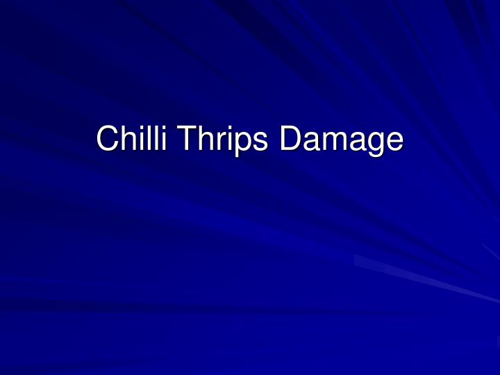Chilli Thrips Damage