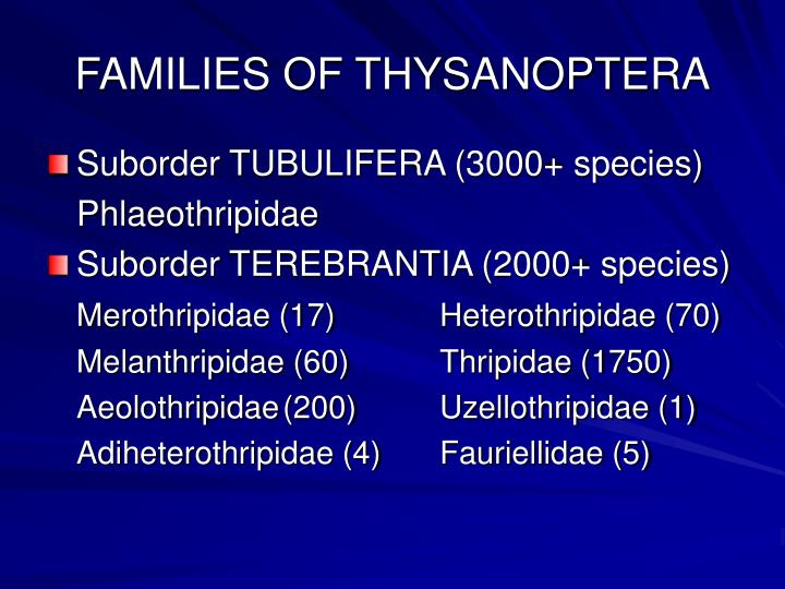 FAMILIES OF THYSANOPTERA
