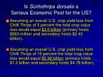 is scirtothrips dorsalis a serious economic pest for the us1
