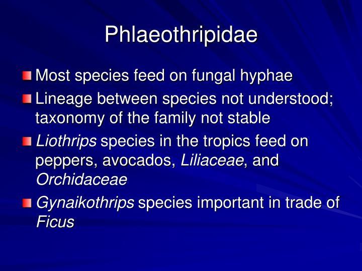 Phlaeothripidae