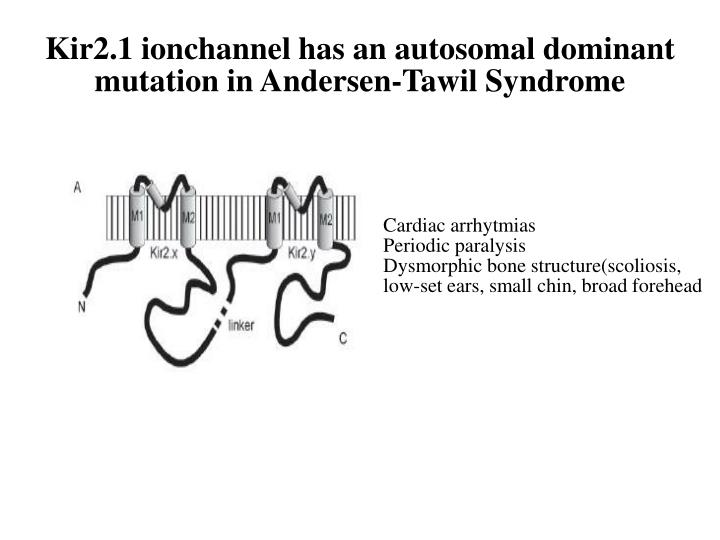 Kir2.1 ionchannel has an autosomal dominant  mutation in Andersen-Tawil Syndrome