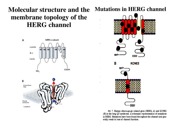 Mutations in HERG channel
