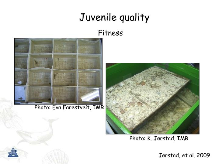 Juvenile quality