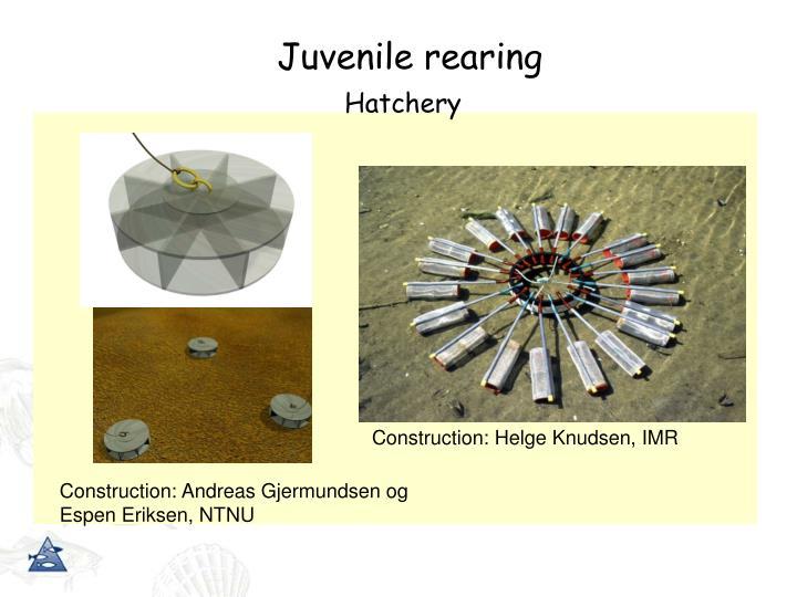 Juvenile rearing