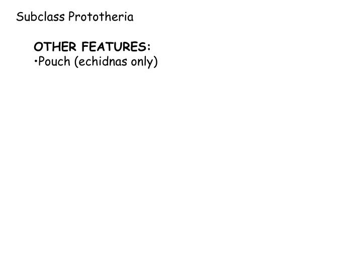 Subclass Prototheria
