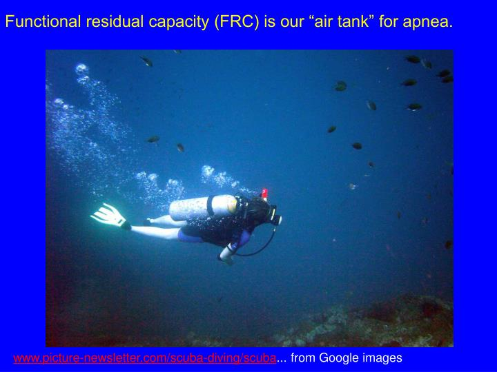 """Functional residual capacity (FRC) is our """"air tank"""" for apnea."""