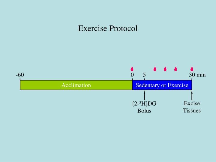 Exercise Protocol