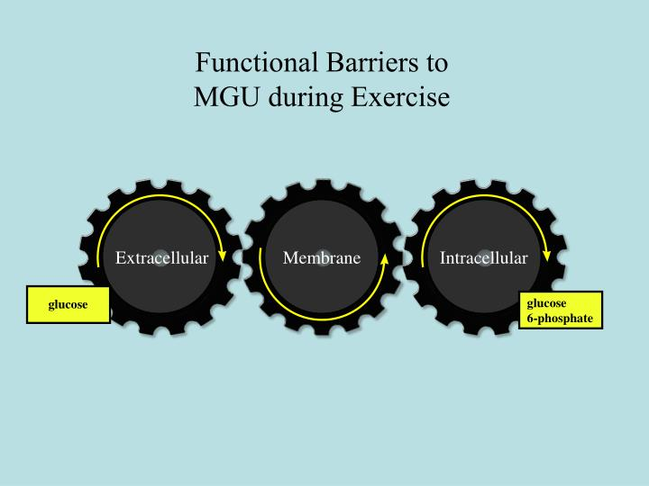 Functional Barriers to