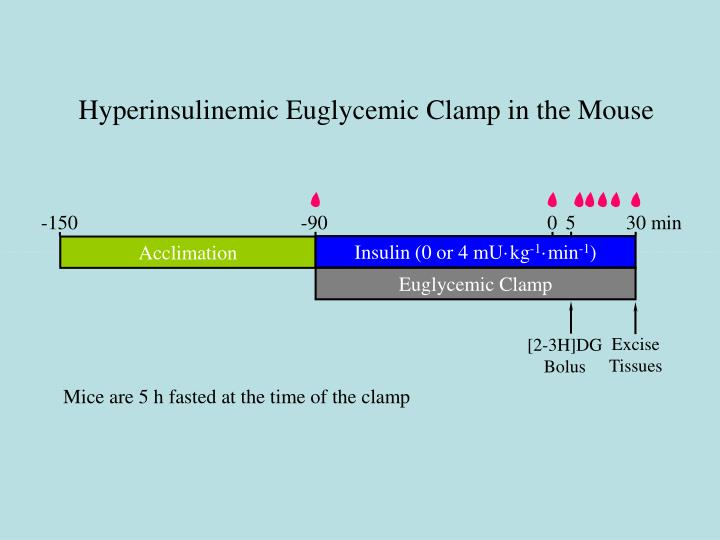 Hyperinsulinemic Euglycemic Clamp in the Mouse