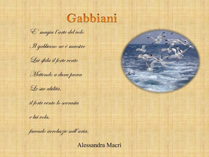 Gabbiani
