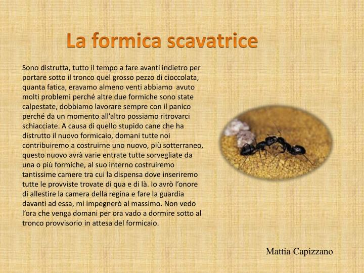 La formica scavatrice