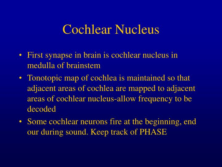 Cochlear Nucleus