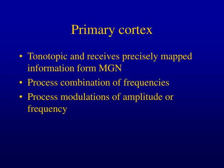 Primary cortex