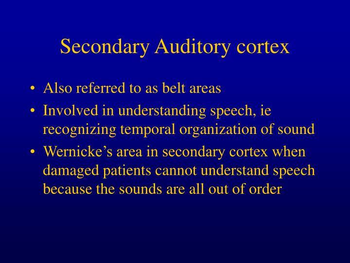 Secondary Auditory cortex