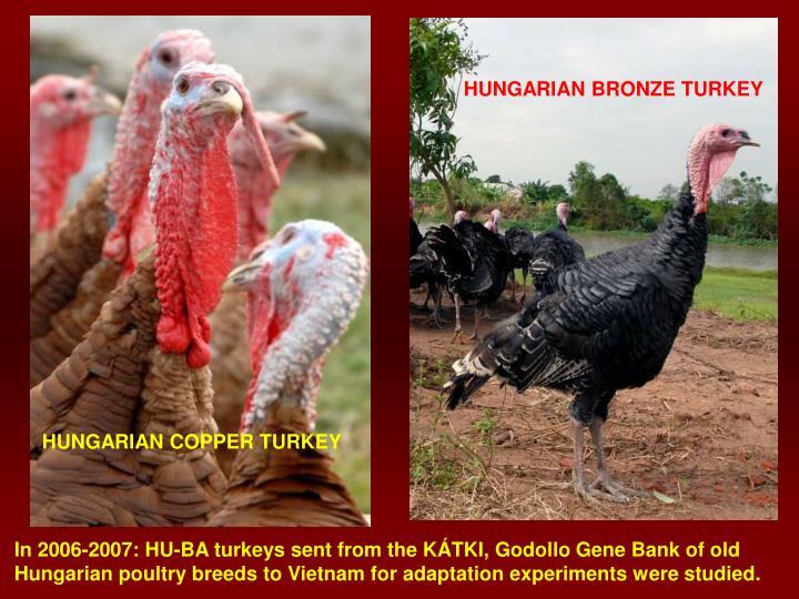 HUNGARIAN BRONZE TURKEY