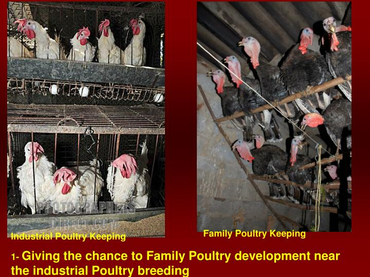 Family Poultry Keeping