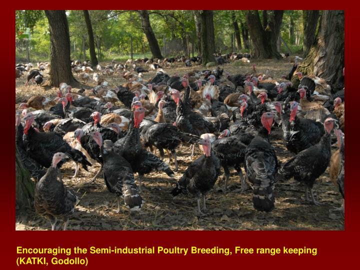 Encouraging the Semi-industrial Poultry Breeding, Free range keeping (KATKI, Godollo)